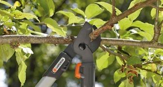 Дачный сезон: обрезаем деревья правильно вместе с GARDENA