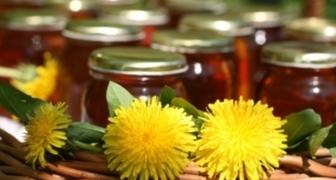 Весеннее варенье, мед из одуванчиков рецепт фото