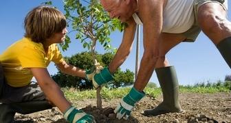 Какие саженцы плодовых деревьев можно сажать в июне фото