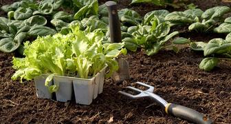 Что из овощей посадить в июне, чтобы успеть собрать урожай фото