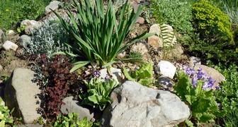 Что делать, если растения в рокарии погибают и ничего не растет