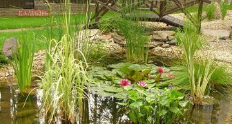 Оформляем водоем красивыми, полезными и съедобными растениями