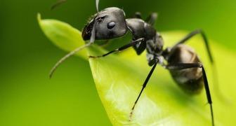 Как избавиться от муравьев в огороде навсегда фото