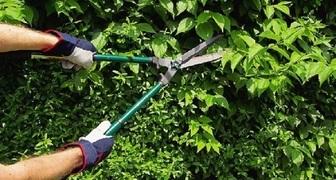 Правила стрижки и обрезки живой изгороди из кустарников и лиан