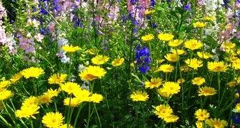 Деление и пересадка летних и весенних многолетников