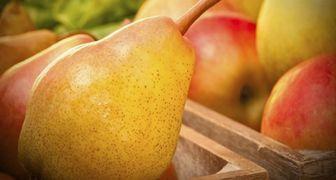 Лучшие способы хранения урожая ранних груш и яблонь