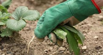Как бороться с сорняками на огороде: лучшие методы и средства