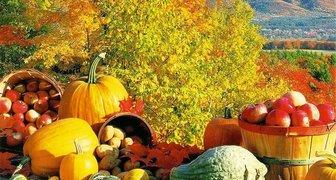Календарь садовода на октябрь. Таблица