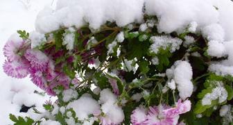 Осеняя подготовка цветников к зимним морозам