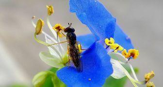 Избавляемся от мошек в цветочных горшках