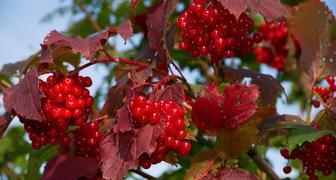 Посадка лекарственных плодовых деревьев в ноябре