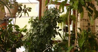 Зимний сад на балконе - идеи дизайна и полезные советы по обустройству