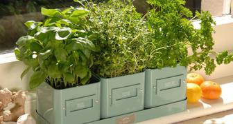 Выращиваем зелень в домашнем огороде, выбираем культуры и их сорта
