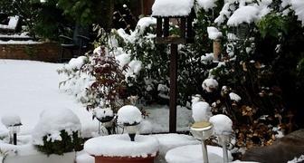 Календарь садовода на декабрь. Таблица фото