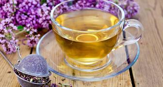 Иван чай - полезные свойства и противопоказания, правила применения