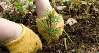 8 правил успешного выращивания хвойных деревьев