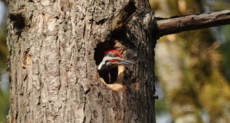Лечим дупла и поврежденные участки дерева без физического воздействия