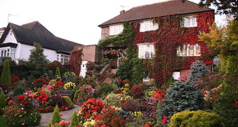 Кустарники для сада - фото декоративных растений в ландшафтном дизайне