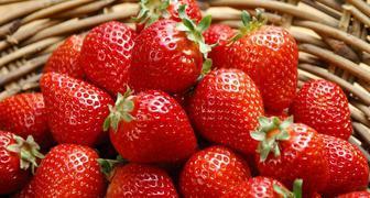 Полезные советы: как получить богатый урожай клубники