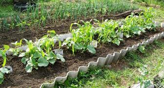 Увеличиваем урожайность культур без применения химических средств