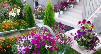 Петуния в саду - уход и применение в ландшафтном дизайне