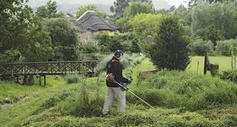 Россияне стали чаще косить газоны