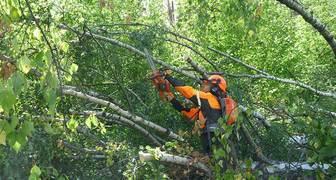 Первая профессиональная пила Husqvarna 536 LiXP прошла испытание ураганом!