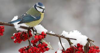 Синичкин день - привлекаем птиц на участок для борьбы с насекомыми
