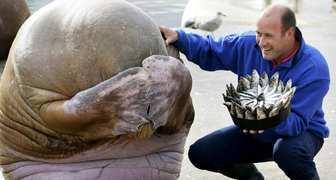 День моржа в России - начинаем закаляться на даче фото