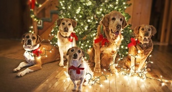Встречаем Новый год Желтой Земляной Собаки по китайскому календарю