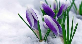 Первый день весны - праздник жизни: традиции и приметы для садовода фото
