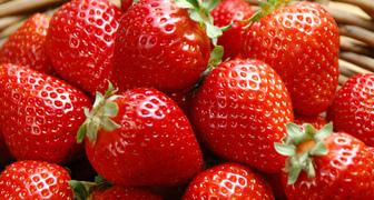 Клубника Красная варежка: отзывы садоводов, характеристики сорта