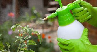 Вымачиваем семена и подкармливаем овощи бором - повышаем урожайность