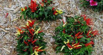 Для восстановления и улучшения качества почвы используем опилки фото