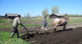 Кузьма Огородник - сеем корнеплоды в огороде и предсказываем заморозки фото