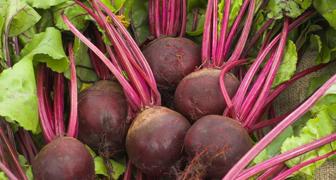 Секреты выращивания свеклы рассадным методом