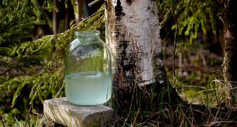 Отмечаем Березосок: определяем погоду на лето и собираем березовый сок