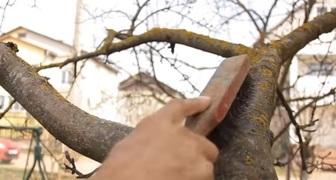 Основы ухода за садом - защищаем и лечим деревья