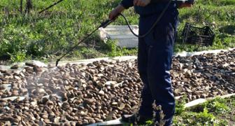 Обработка картофеля Престижем: вред или польза от применения препарата