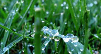 Иван Медвяные росы - защищаем сад от вредителей и болезней