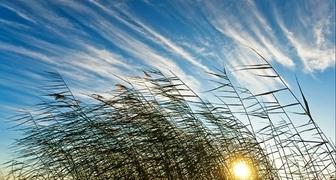 Лукьян Ветряк: предсказываем погоду по ветру и занимаемся водопроводом