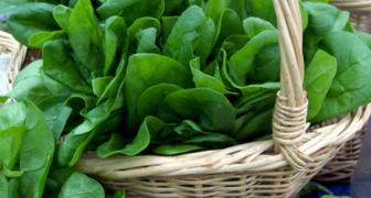 Шпинат - выращивание из семян от выбора сорта до уборки урожая