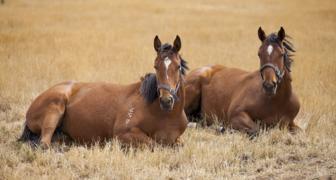 Флор и Лавр лошадники: отмечаем День ветеринара, ухаживаем за лошадьми
