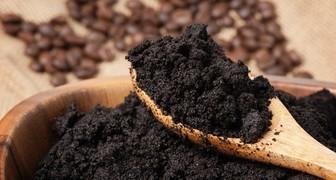 Применение кофе в саду и огороде, польза кофейной гущи для цветов