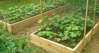 Выращиваем огурцы на теплых грядках и собираем первый урожай в мае