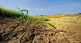 Глинистая почва на участке - как облагородить и добиться урожайности