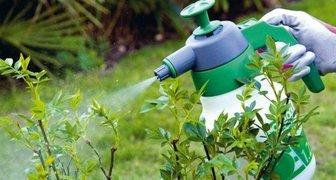 Водка, самогон и спирт в борьбе с тлёй в саду и огроде