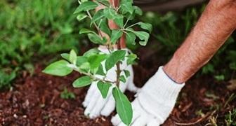 12 правил, которые нельзя нарушать при посадке плодовых деревьев