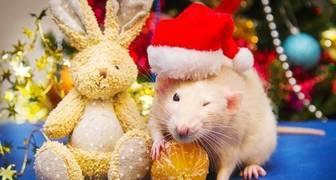 Новый год 2020 - цвета, украшения и одежда, которые понравятся Крысе