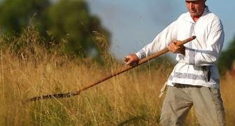 Кириллов день - собираем клубнику и косим траву на сено
